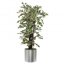 Artificial Ficus Exotica Variagated Plant